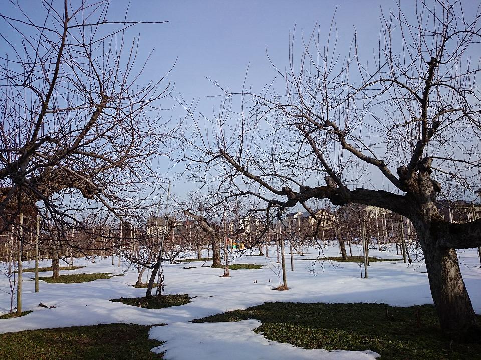 わいんさっぷから見える冬のリンゴ畑